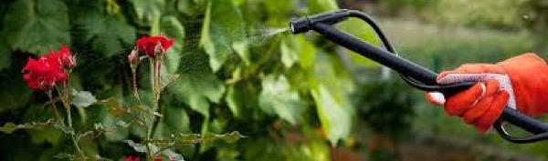 piante-pesticidi-argento-colloidale-01