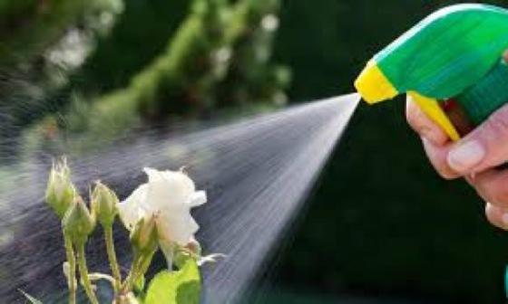 piante-pesticidi-argento-colloidale-04